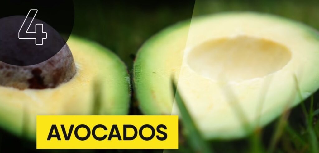 Avocados - Top 5 High Thermic Foods