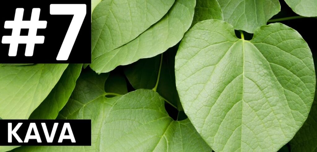 Kava - How to Reduce Your Stress