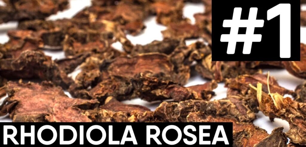 Rhodiola Rosea - How to Reduce Your Stress